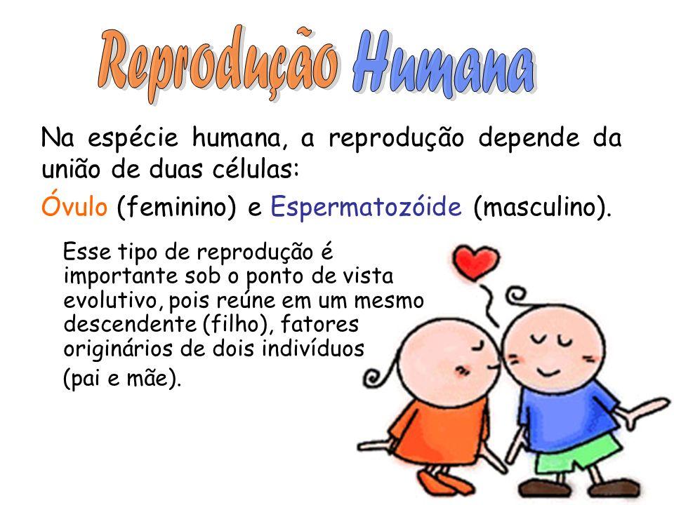 ReproduçãoHumana. Na espécie humana, a reprodução depende da união de duas células: Óvulo (feminino) e Espermatozóide (masculino).
