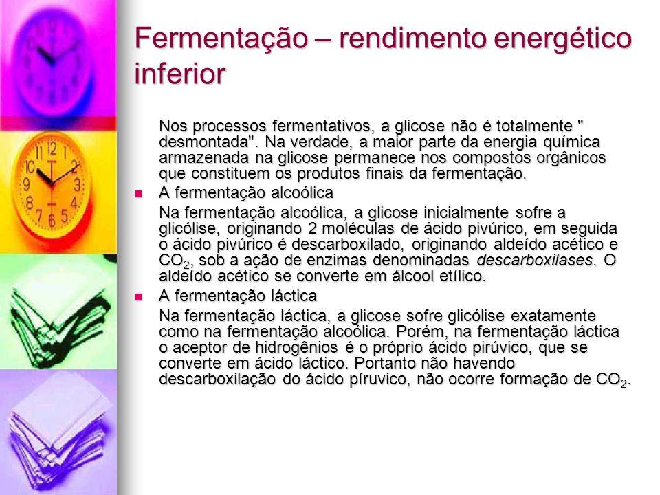 Fermentação – rendimento energético inferior