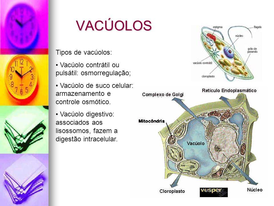 VACÚOLOS Tipos de vacúolos: