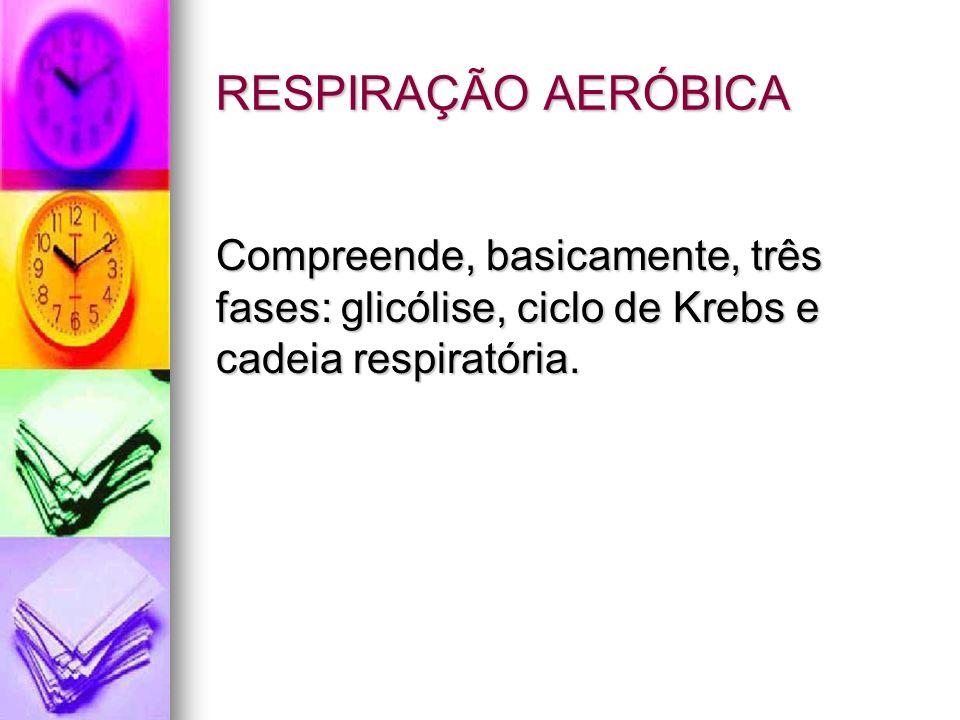 RESPIRAÇÃO AERÓBICA Compreende, basicamente, três fases: glicólise, ciclo de Krebs e cadeia respiratória.