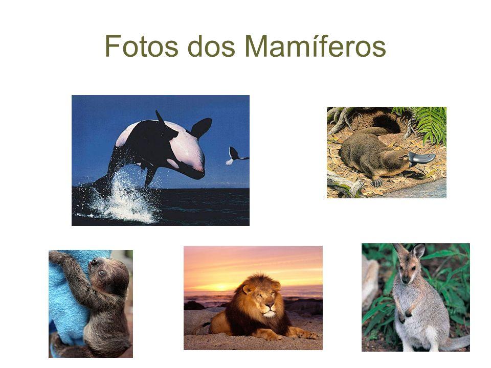 Fotos dos Mamíferos