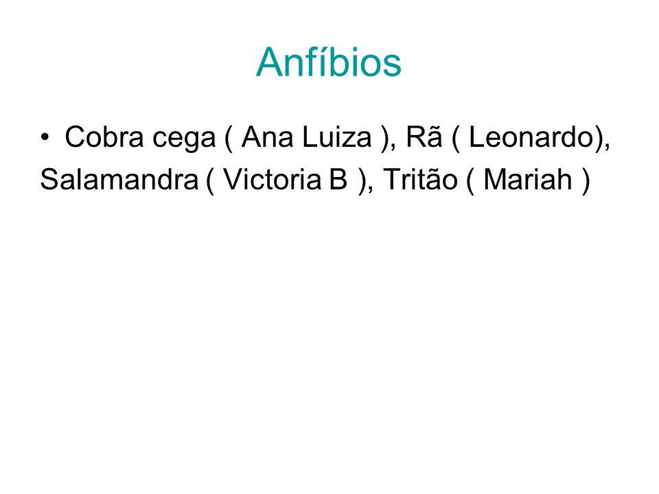 Anfíbios Cobra cega ( Ana Luiza ), Rã ( Leonardo),