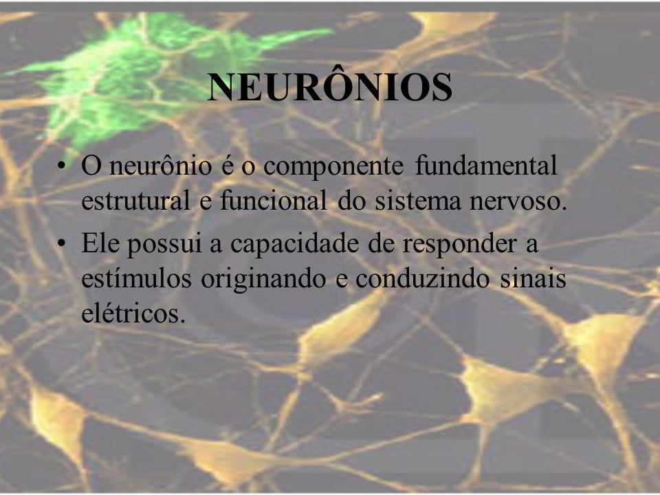 NEURÔNIOSO neurônio é o componente fundamental estrutural e funcional do sistema nervoso.