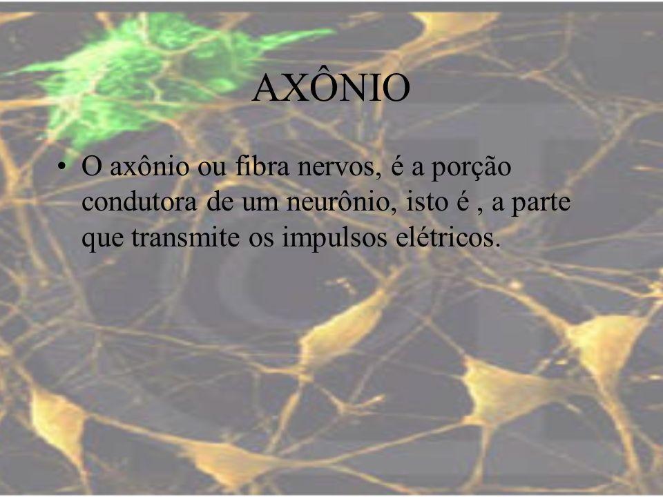 AXÔNIOO axônio ou fibra nervos, é a porção condutora de um neurônio, isto é , a parte que transmite os impulsos elétricos.
