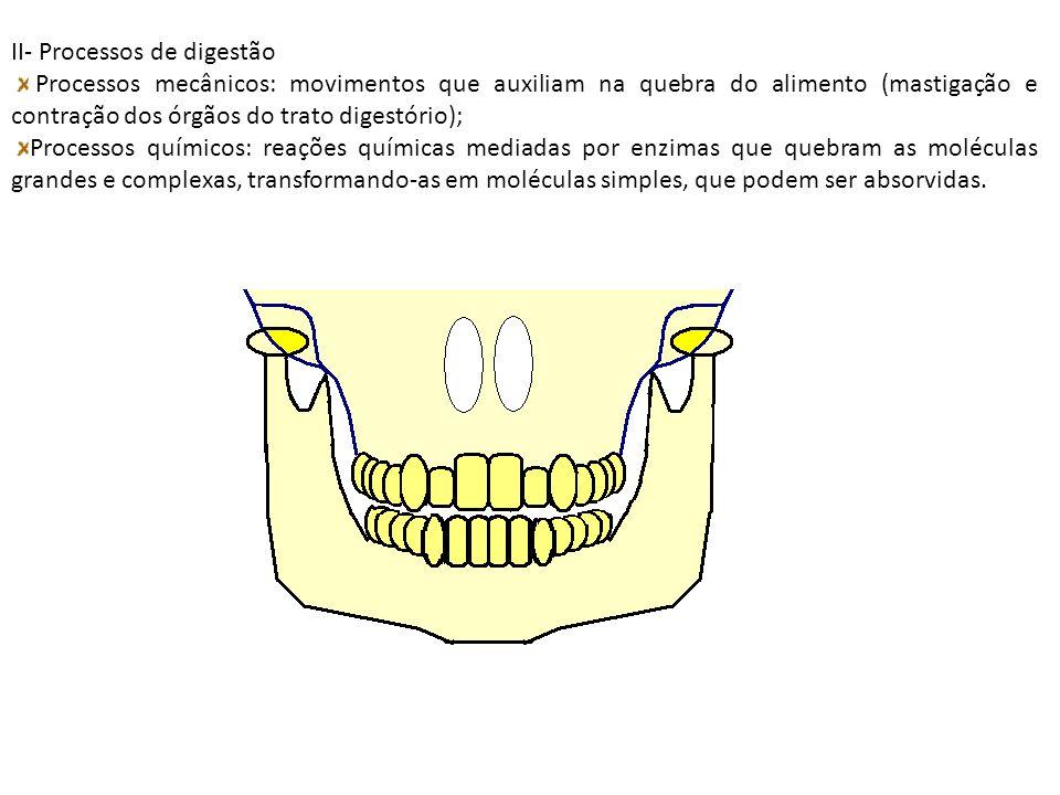 II- Processos de digestão