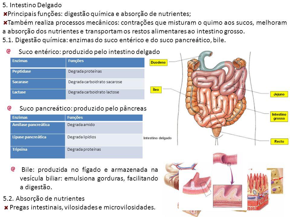 Principais funções: digestão química e absorção de nutrientes;