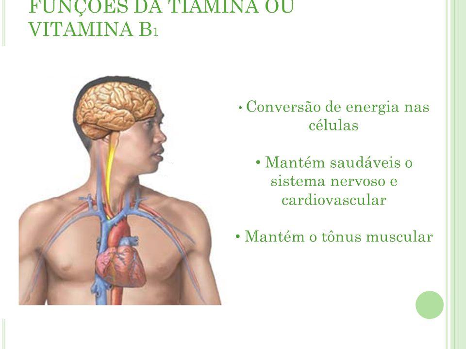 FUNÇÕES DA TIAMINA OU VITAMINA B1