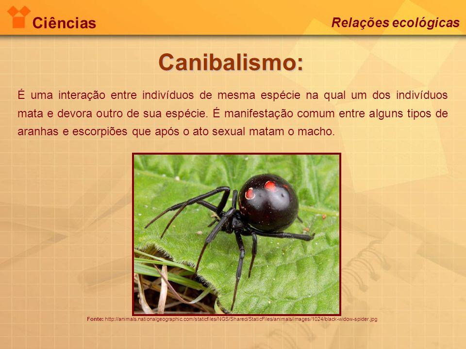 Canibalismo: Ciências Relações ecológicas
