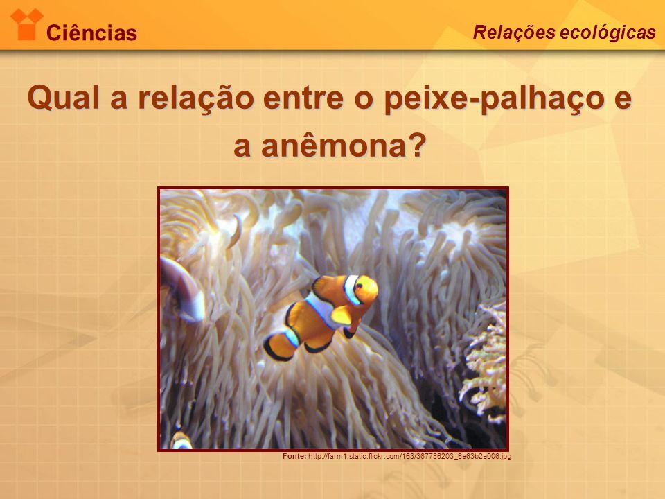 Qual a relação entre o peixe-palhaço e a anêmona