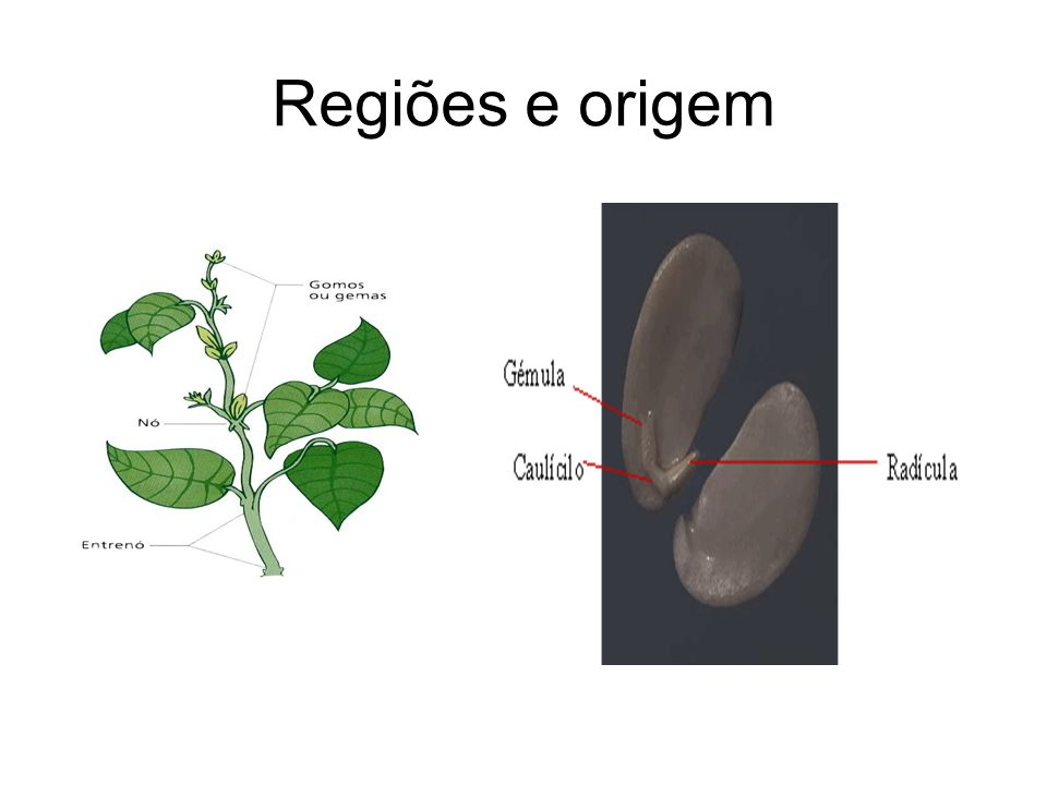 Regiões e origem