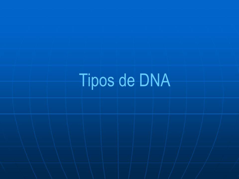 Tipos de DNA