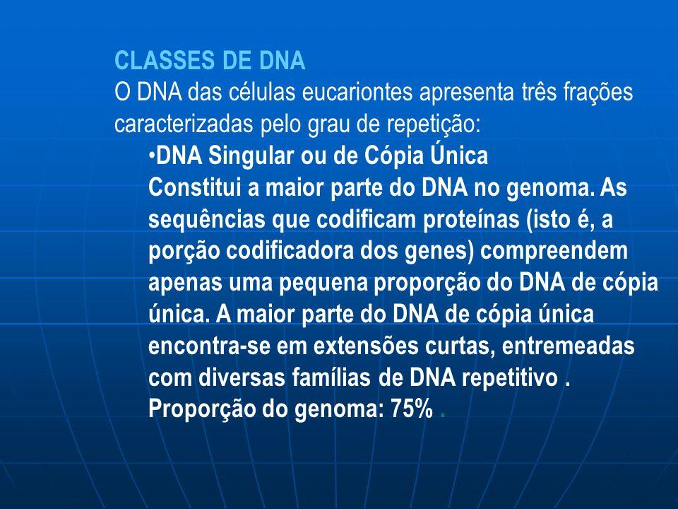 CLASSES DE DNA O DNA das células eucariontes apresenta três frações caracterizadas pelo grau de repetição: