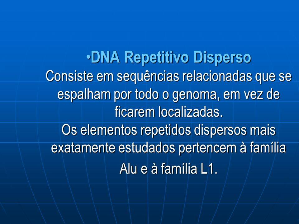 DNA Repetitivo Disperso Consiste em sequências relacionadas que se espalham por todo o genoma, em vez de ficarem localizadas.
