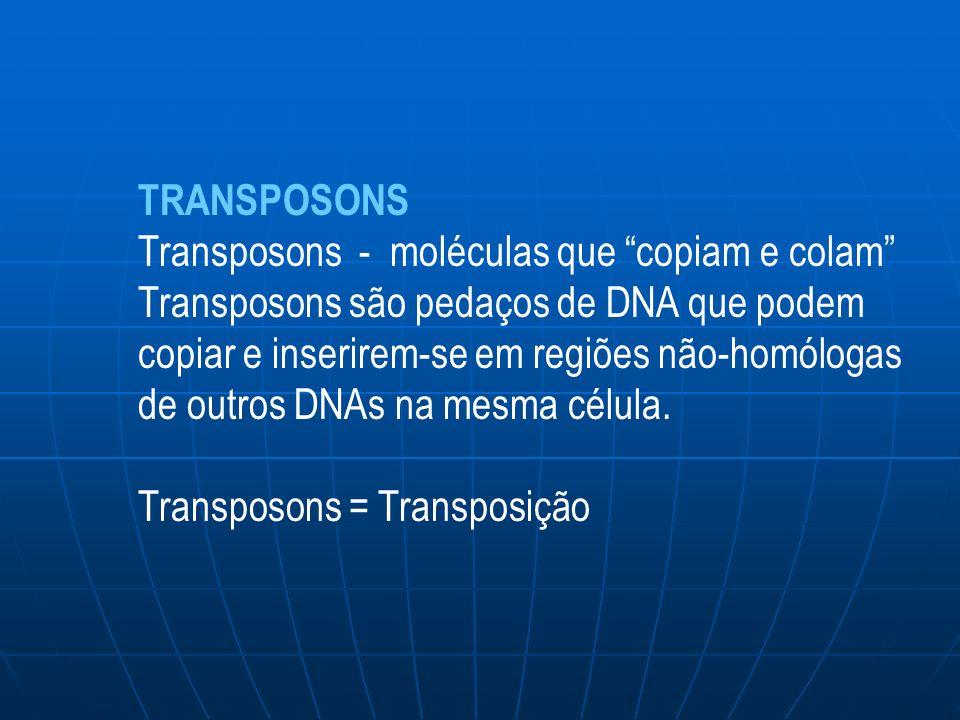 TRANSPOSONS Transposons - moléculas que copiam e colam