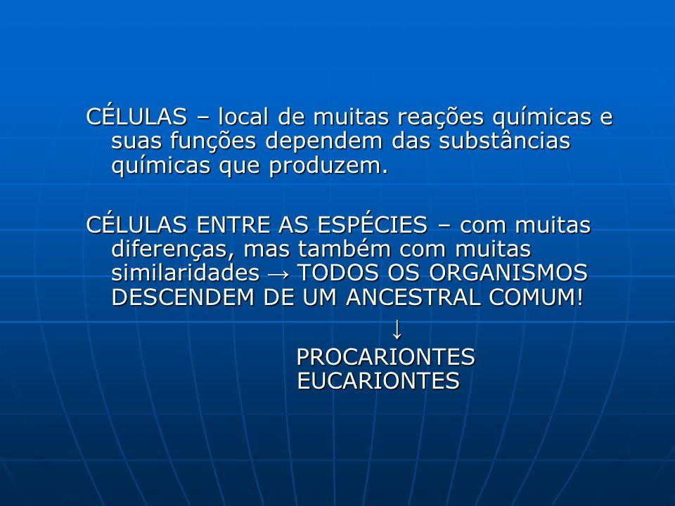 PROCARIONTES EUCARIONTES