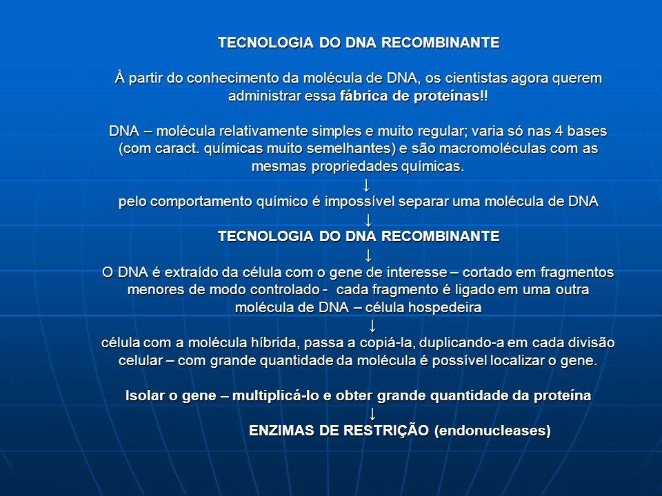 TECNOLOGIA DO DNA RECOMBINANTE À partir do conhecimento da molécula de DNA, os cientistas agora querem administrar essa fábrica de proteínas!.