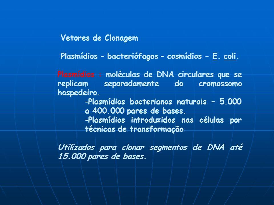 Vetores de Clonagem Plasmídios – bacteriófagos – cosmídios - E. coli.