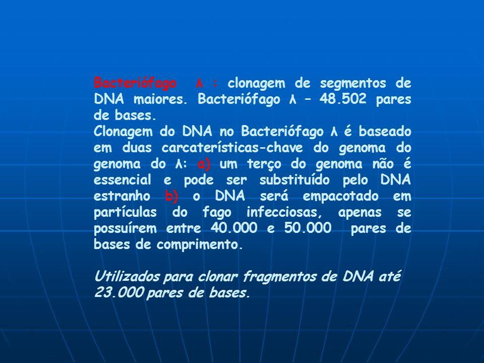 Bacteriófago λ : clonagem de segmentos de DNA maiores