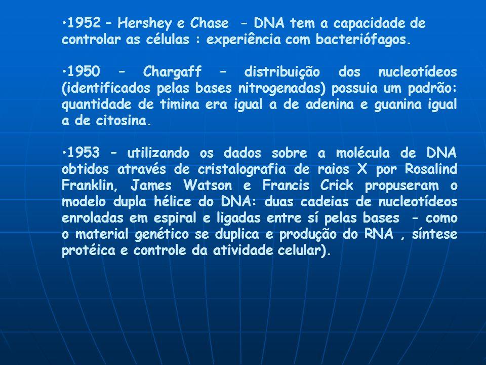 1952 – Hershey e Chase - DNA tem a capacidade de controlar as células : experiência com bacteriófagos.