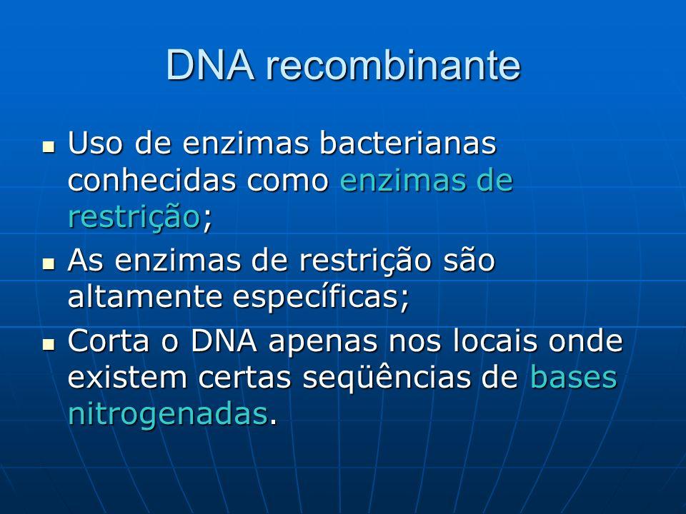 DNA recombinante Uso de enzimas bacterianas conhecidas como enzimas de restrição; As enzimas de restrição são altamente específicas;