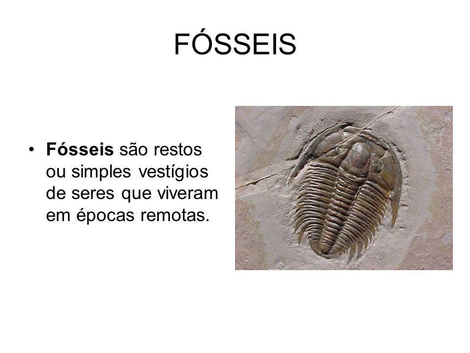 FÓSSEIS Fósseis são restos ou simples vestígios de seres que viveram em épocas remotas.