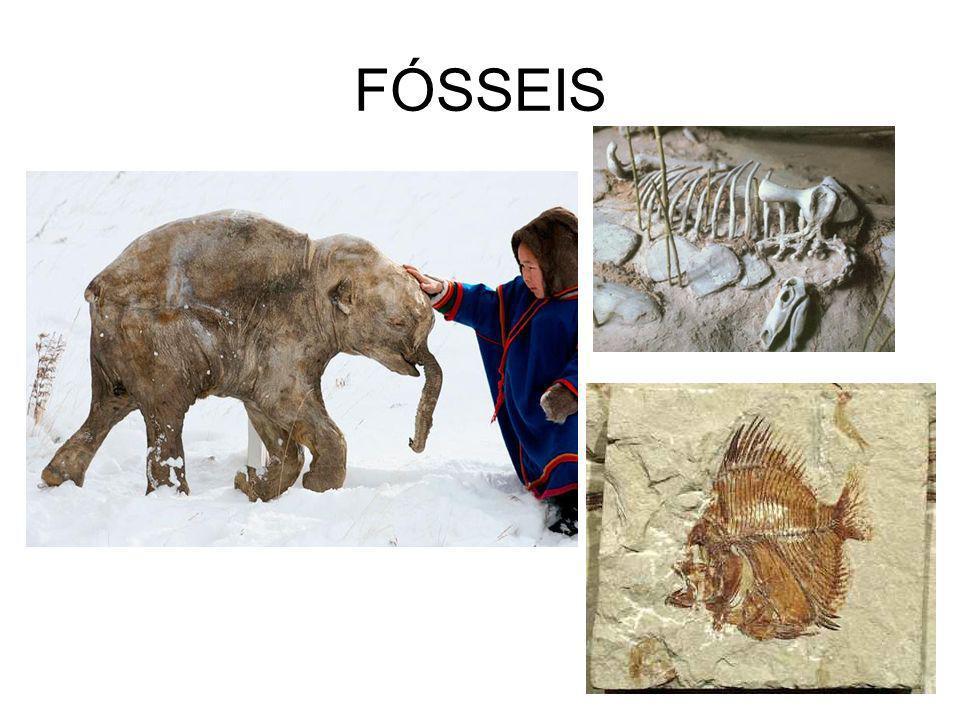 FÓSSEIS