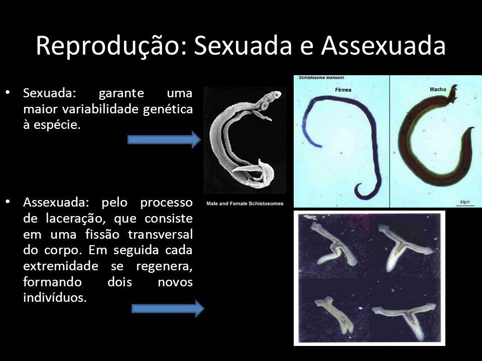 Reprodução: Sexuada e Assexuada