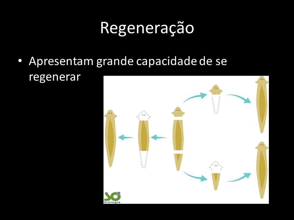 Regeneração Apresentam grande capacidade de se regenerar