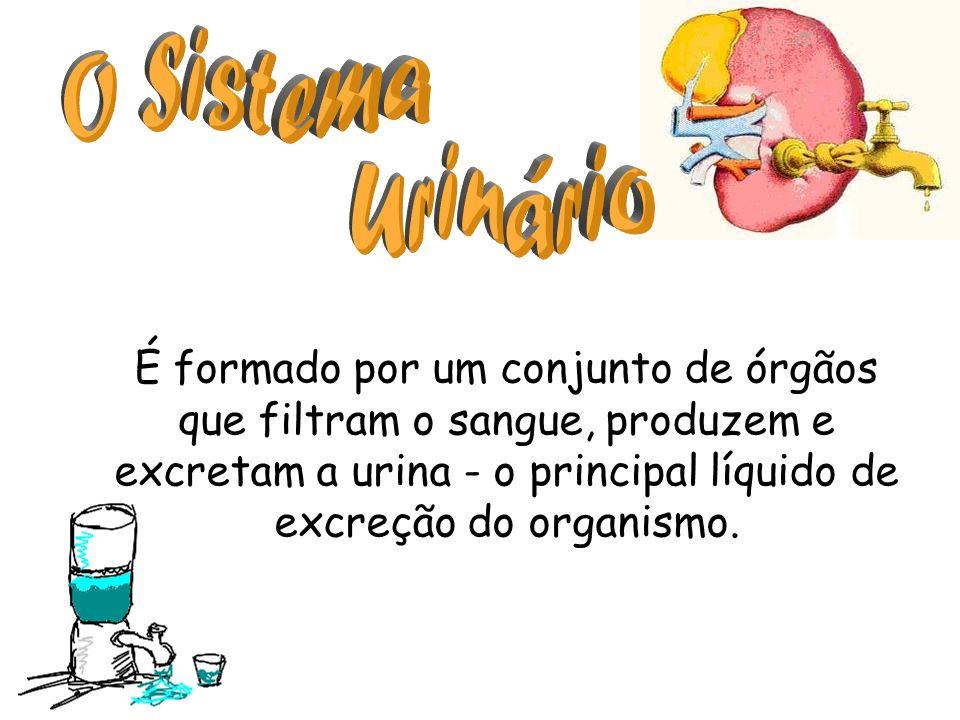 O Sistema Urinário.