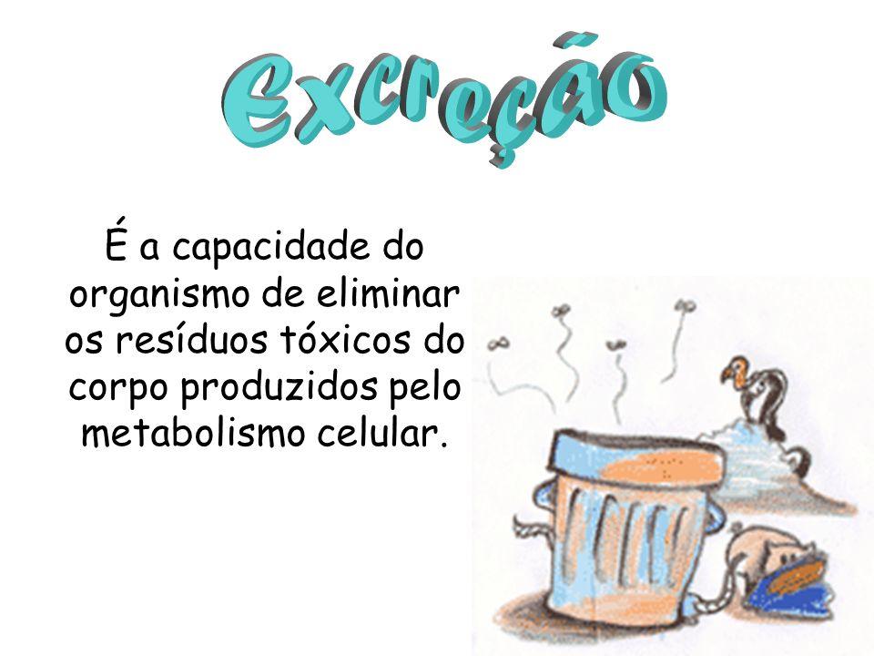 Excreção É a capacidade do organismo de eliminar os resíduos tóxicos do corpo produzidos pelo metabolismo celular.