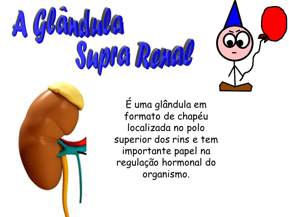 A Glândula Supra Renal.
