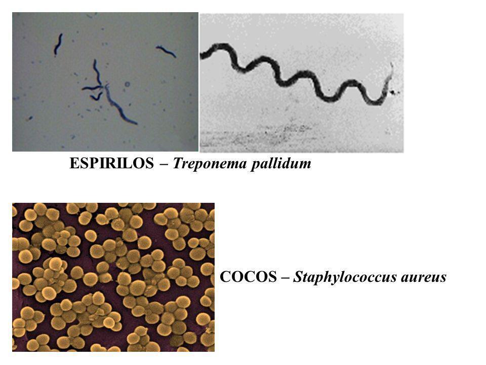 ESPIRILOS – Treponema pallidum