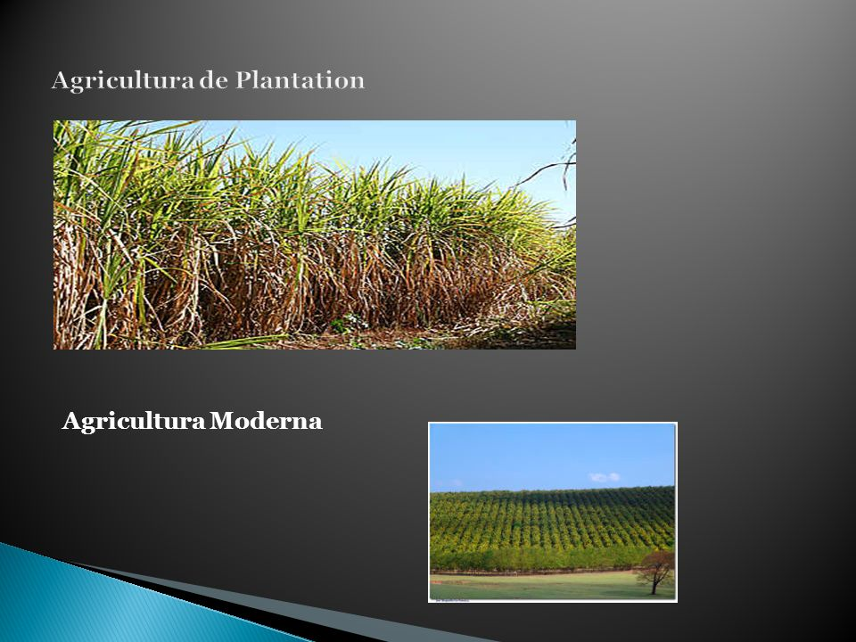 Agricultura de Plantation