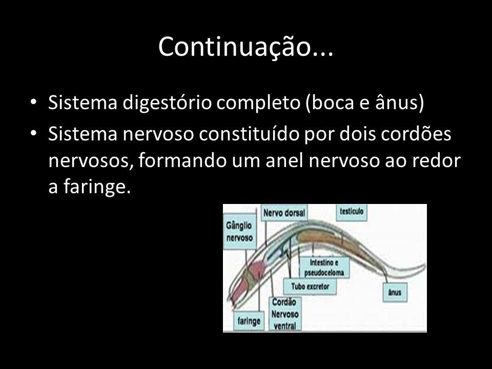 Continuação... Sistema digestório completo (boca e ânus)