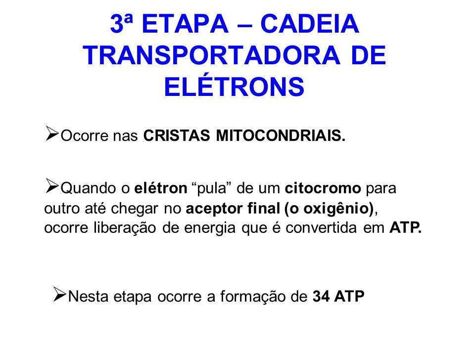 3ª ETAPA – CADEIA TRANSPORTADORA DE ELÉTRONS