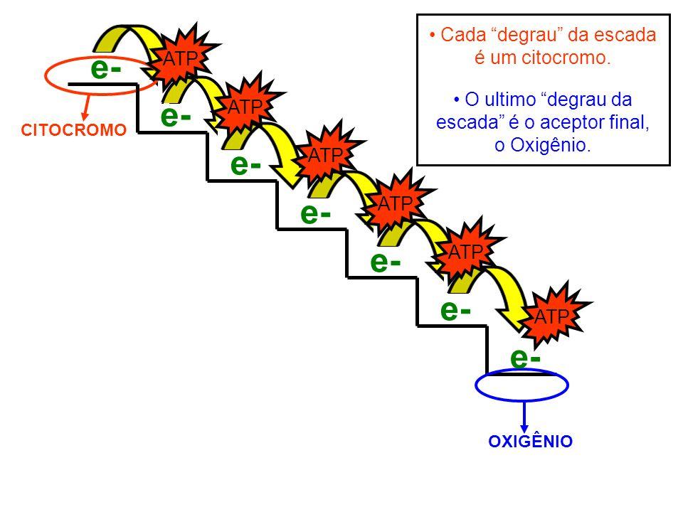 e- e- e- e- e- e- e- Cada degrau da escada é um citocromo. ATP ATP