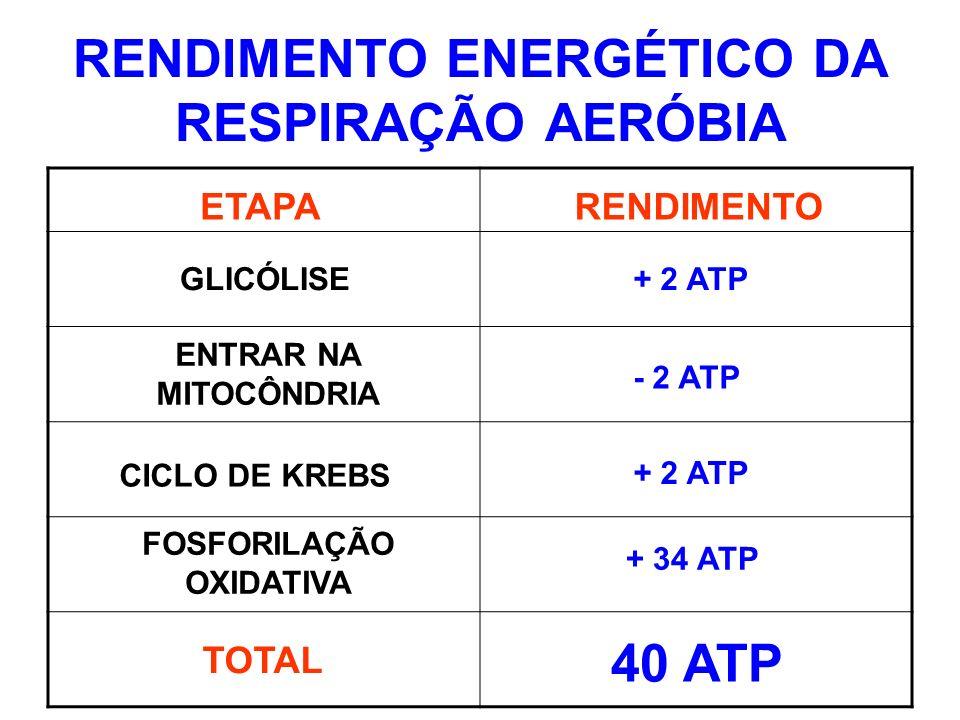 RENDIMENTO ENERGÉTICO DA RESPIRAÇÃO AERÓBIA