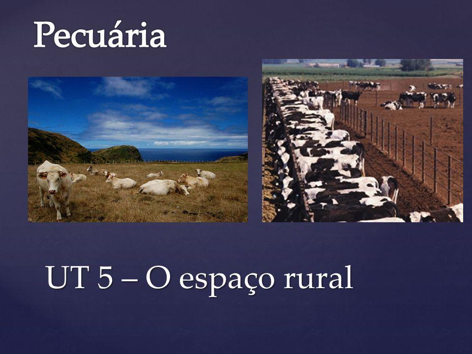 Pecuária UT 5 – O espaço rural