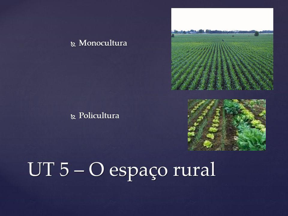 Monocultura Policultura UT 5 – O espaço rural