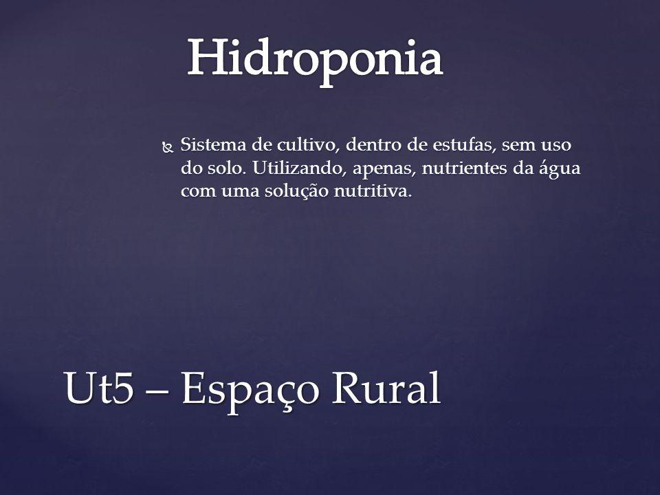 Hidroponia Ut5 – Espaço Rural