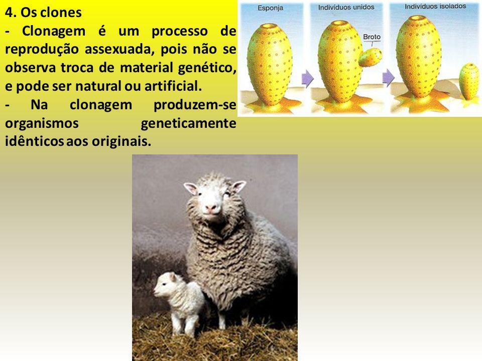 4. Os clones - Clonagem é um processo de reprodução assexuada, pois não se observa troca de material genético, e pode ser natural ou artificial.