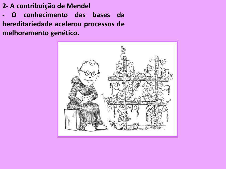 2- A contribuição de Mendel