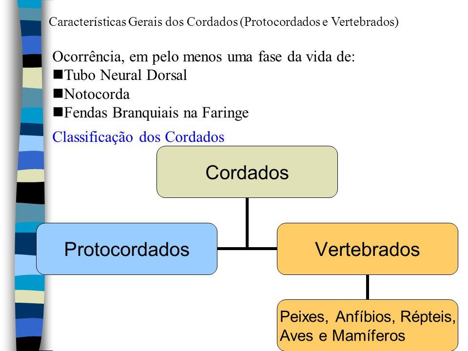 Ocorrência, em pelo menos uma fase da vida de: Tubo Neural Dorsal