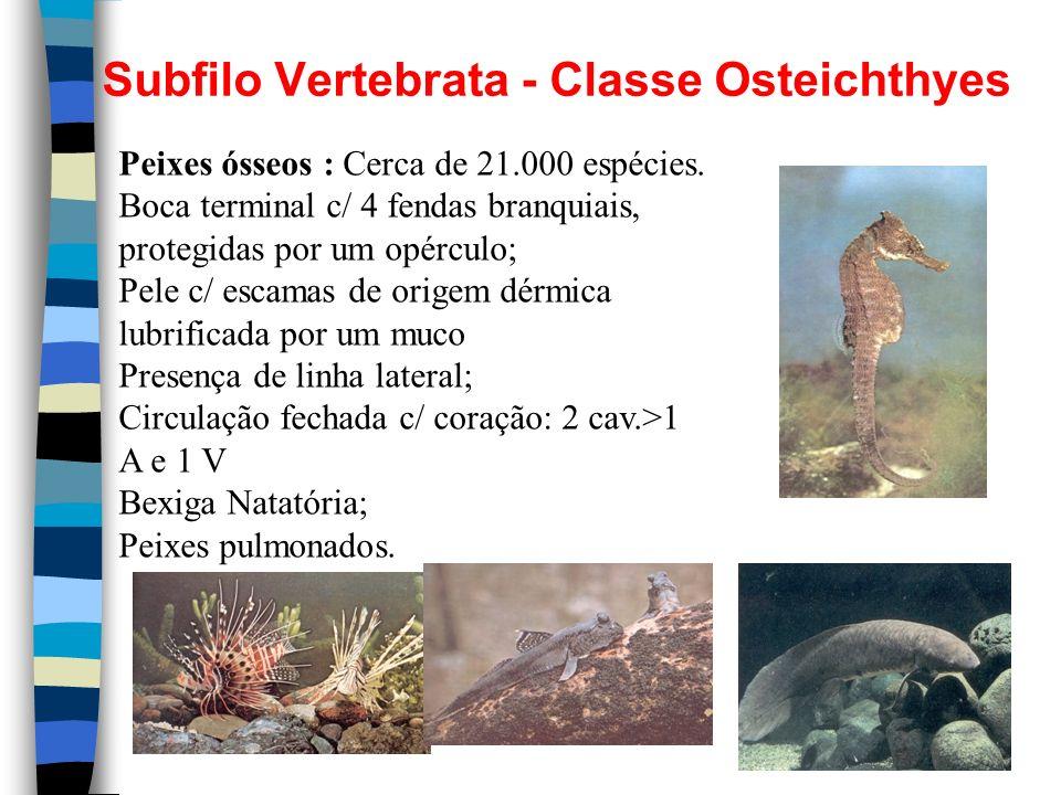 Subfilo Vertebrata - Classe Osteichthyes