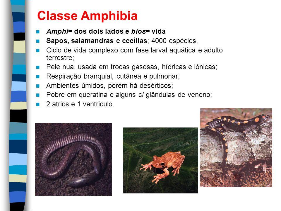 Classe Amphibia Amphi= dos dois lados e bios= vida