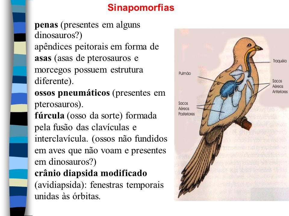 Sinapomorfias penas (presentes em alguns dinosauros )
