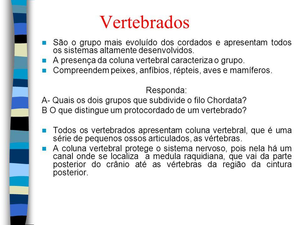 VertebradosSão o grupo mais evoluído dos cordados e apresentam todos os sistemas altamente desenvolvidos.