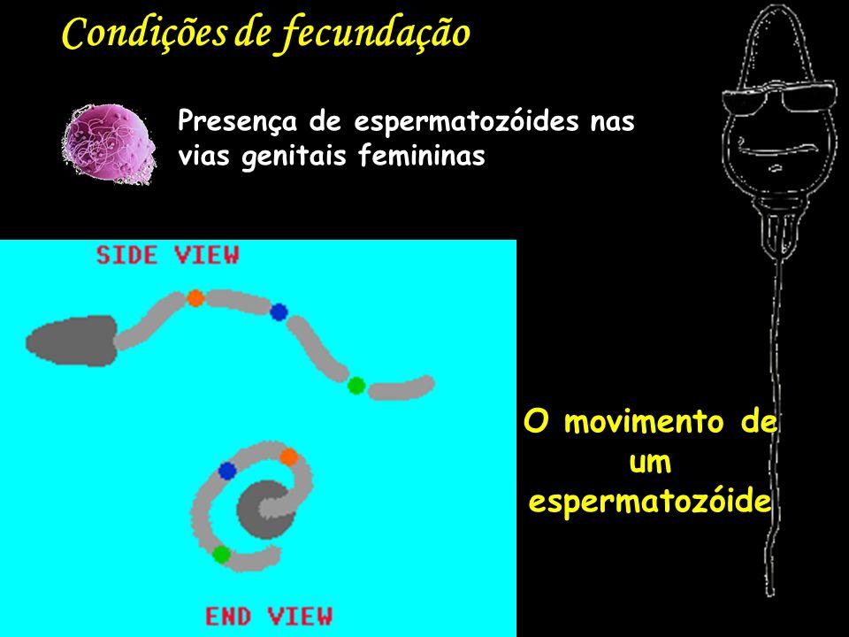 O movimento de um espermatozóide