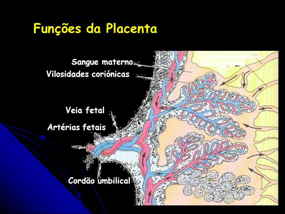 Vilosidades coriónicas