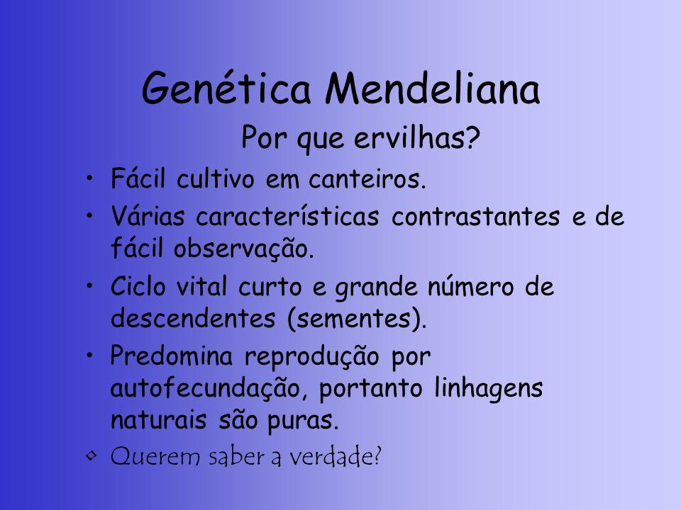 Genética Mendeliana Por que ervilhas Fácil cultivo em canteiros.